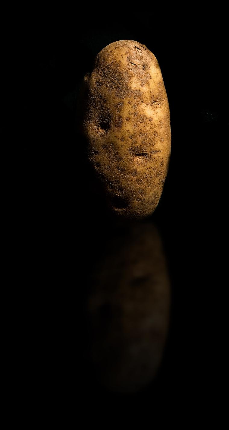 IMG_8361 ziemniak 3