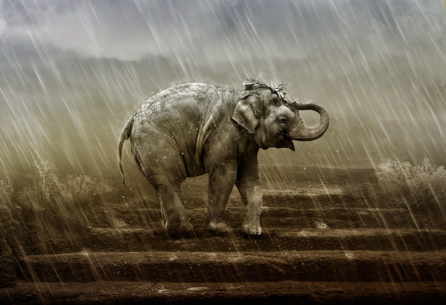 elefant-im-regen